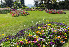 Flowerbed decorating in the garden Royalty Free Stock Photography
