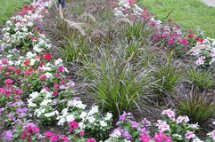 Flowerbed decoration in the Park from Washington DC in USA Royalty Free Stock Images