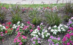 Flowerbed decoration in the Park from Washington DC in USA Royalty Free Stock Photography