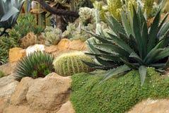 Flowerbed del cactus immagine stock libera da diritti