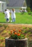 Flowerbed della città universitaria dell'istituto universitario Immagini Stock