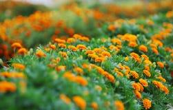 Flowerbed della sorgente fotografie stock libere da diritti