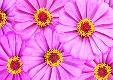 Flowerbed della sorgente immagini stock