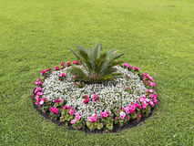 Flowerbed with different colors in the middle of the lawn Royalty Free Stock Photography