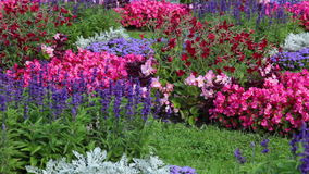 Flowerbed with different flowers Royalty Free Stock Images