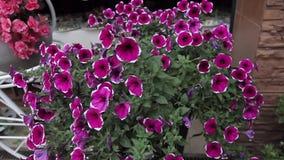 Flowerbed domu kolory zbiory