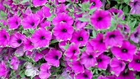 Flowerbed domu kolory zdjęcie wideo