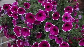 Flowerbed domu kolory zbiory wideo
