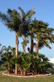 Flowerbed drzewka palmowe Obrazy Stock