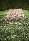 Flowerbed filled with different colored tulips, selective focus, Netherlands Stock Photo