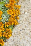 Flowerbed finely cured with orange flowers on gravel floor.  royalty free stock photo