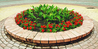Flowerbed With Flowers Royalty Free Stock Images