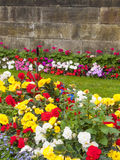 Flowerbed. Flowers in garden or park in the summer Royalty Free Stock Images