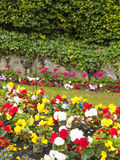 Flowerbed. Flowers in garden or park in the summer Stock Images