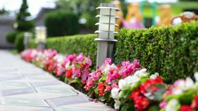Flowerbed With Flowers Illuminated By Energy-Saving Solar Powered Lanterns Along Path Causeway On Courtyard Going To The. House stock video footage