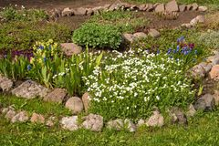 Homemade flowerbed with flowers and stones. Flowerbed with flowers and stones Stock Image