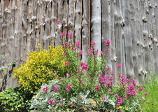 Flowerbed in front of wooden panel Royalty Free Stock Photography