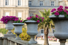 Flowerbed full of flowers in Luxembourg garden,  Paris Royalty Free Stock Images