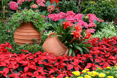Flowerbed with gallipot Stock Images