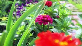 Flowerbed garden flowers stock video footage