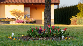 Flowerbed at garden. Some bed of flowers from garden - tulips, crocus, hyacinthus etc stock photography