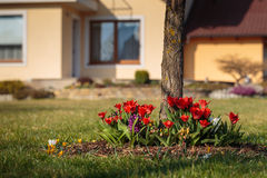 Flowerbed at garden near house Royalty Free Stock Image