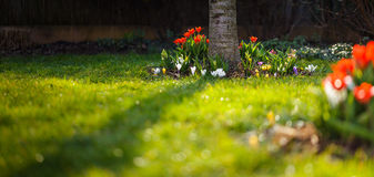 Flowerbed at garden. Some bed of flowers from garden - tulips, crocus, hyacinthus etc royalty free stock photography