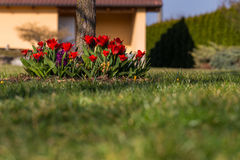 Flowerbed at garden. Some bed of flowers from garden - tulips, crocus, hyacinthus etc royalty free stock photo