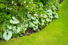 Flowerbed with green leaves Stock Photos
