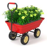 Flowerbed in hand trolley. Stock Photos