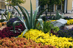 Flowerbed in Kislovodsk. Stock Photography