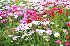 flowerbed kolorowy kwiat ogród Zdjęcie Royalty Free