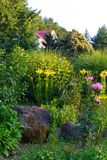 A flowerbed with large cobblestones and flowers around them. It is visible marigolds, roses of pink color and some other. Yellow flowers . For your design Royalty Free Stock Photography