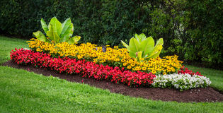 Flowerbed Royalty Free Stock Image