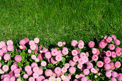 Flowerbed and lawn Stock Images