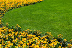 Flowerbed and lawn. Curve of yellow flowerbed and lawn Royalty Free Stock Photography