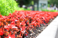 Flowerbed Stock Image