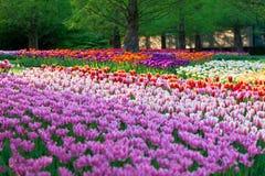 Flowerbed luminoso in Keukenhof fotografie stock