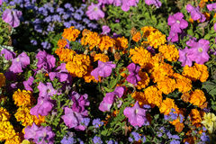 The flowerbed in the Luxembourg Gardens Stock Photo