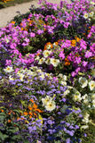 The flowerbed in the Luxembourg Gardens Royalty Free Stock Photography