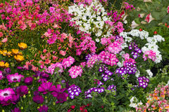 A flowerbed with many differnt plants. A colorful flowerbed with many differnt plants in a cottage garden Royalty Free Stock Photography