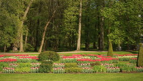 Flowerbed of many fresh red, white and pink tulips flowers in city park. Against the background of trees and greens stock footage