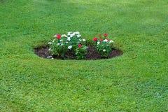 Flowerbed mit den roten und weißen Blumen Lizenzfreie Stockfotografie