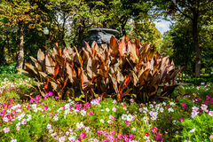 Flowerbed in Moscow Gorky park Royalty Free Stock Image