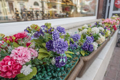 Flowerbed with multicolored violet flowers on a Arbat Street in Moscow, Russia. Selective focus Royalty Free Stock Photos