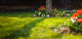 Flowerbed no jardim Fotografia de Stock Royalty Free
