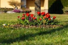 Flowerbed no jardim Foto de Stock Royalty Free