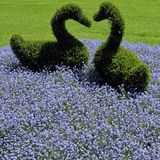 Flowerbed with ornamental hedges Royalty Free Stock Images