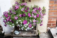 Flowerbed outside next to stairs Royalty Free Stock Image