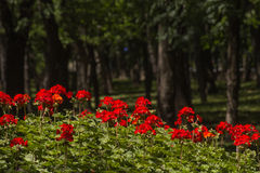 Flowerbed in the park Stock Images